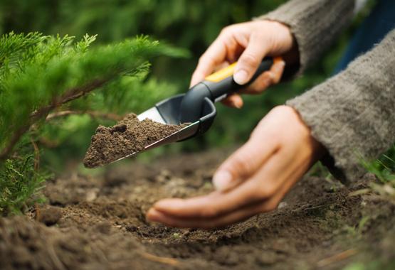 Pasirūpinkite augalais nuo pat pradžių