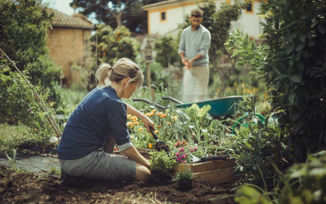 Sodininkystė