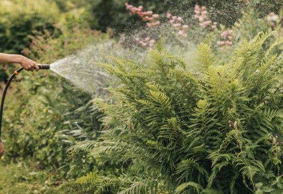 Pasirinkite jūsų klimatui tinkamus augalus