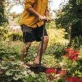 Ergo ergonomiškas įrankis svogūnėlių sodinimui